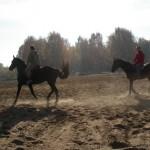 Конные прогулки в лесу